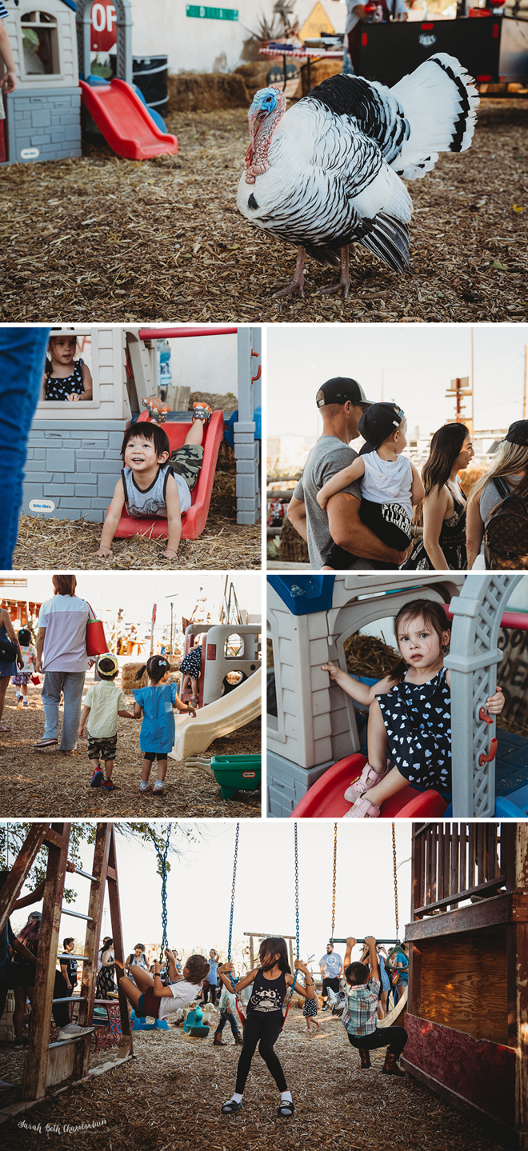 Dash's Birthday at McKee Ranch | Event Photography | Las Vegas Family Photographer | Birthday Party | Family Farm | Pumpkin Patch | Farm Animals | Pony Ride